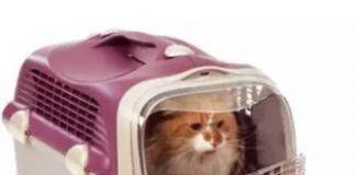 กระเป๋าใส่แมว