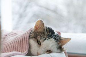 แมวตัวร้อน แก้ยังไง