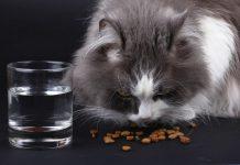 แมวไม่กินอาหาร